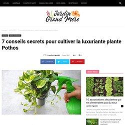 7 conseils secrets pour cultiver la luxuriante plante Pothos