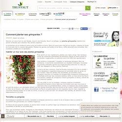 Conseils pour planter des fleurs grimpantes - Jardinerie TRUFFAUT conseils Plantes grimpantes Truffaut