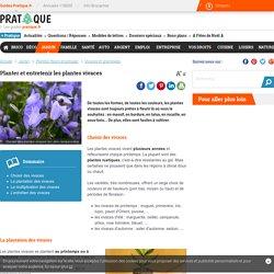 Plantes vivaces : conseils de plantation et d'entretien