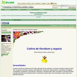 Consejos para el cultivo de los Oncidium y Aspasia