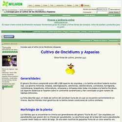 Consejos para el cultivo de los Oncidiums y Aspasias