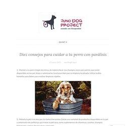 Diez consejos para cuidar a tu perro con parálisis – Juno Dog Project