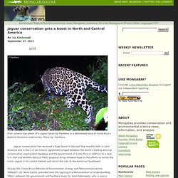 Jaguar conservation gets a boost in North and Central America