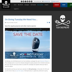 Sea Shepherd Conservation Society - On Giving Tuesday We Need You...