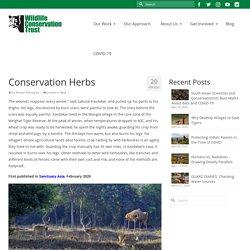 Conservation Herbs - Wildlife Conservation Trust