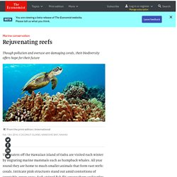 Marine conservation: Rejuvenating reefs