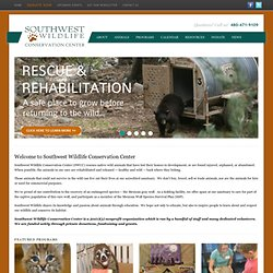 Southwest Wildlife organization, animal rescue, animal rehabilitation, Arizona animal rescue