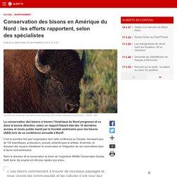 Conservation des bisons en Amérique du Nord:les efforts rapportent, selon des spécialistes