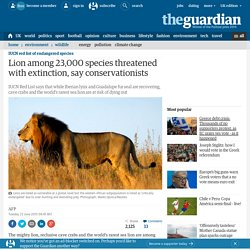 Lion among 23,000 species threatened with extinction, say conservationists