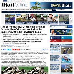 Conservationists hail 'extraordinary' discovery of African zebra herd migrating 300 miles to watering holes