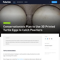 Conservationists Plan to Use 3D Printed Turtle Eggs to Catch Poachers
