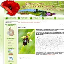 Le Conservatoire d'espaces naturels Centre-Val de Loire - L'Ophrys mouche