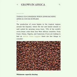 Things To Consider When Approaching Africa Cocoa Supplier