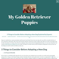 5 Things to Consider Before Adopting a New Dog Explained by Experts! – My Golden Retriever Puppies