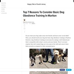 Top 7 Reasons To Consider Basic Dog Obedience Training In Marlton