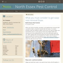 What you must consider to get wasp nest removal Essex - North Essex Pest Control : powered by Doodlekit