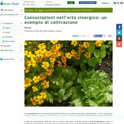 Consociazioni nell'orto sinergico: un esempio di coltivazione