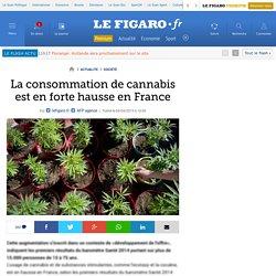 La consommation de cannabis est en forte hausse en France