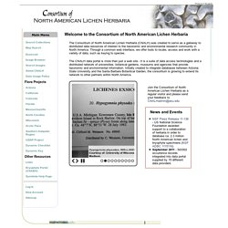 Consortium of North American Lichen Herbaria