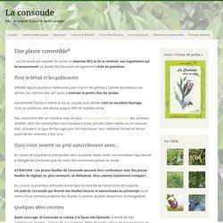 Manger de la consoude : Récolte, recettes et précautions