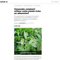 Consoude: comment utiliser cette plante riche en allantoïne