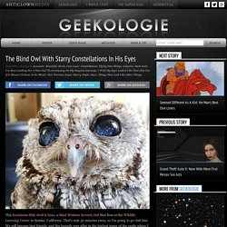 The Blind Owl With Starry Constellations In His Eyes