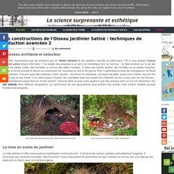 Les constructions de l'Oiseau Jardinier Satiné : techniques de séduction avancées 2
