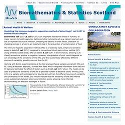 BIOSS - 2011 - Modelling the immuno-magnetic separation method of detecting E. coli O157 in bovine faecal samples