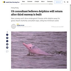 US consultant believes dolphins will return after third runway is built