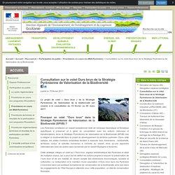 Consultation sur le volet Ours brun de la Stratégie Pyrénéenne de Valorisation de la Biodiversité - DREAL Occitanie