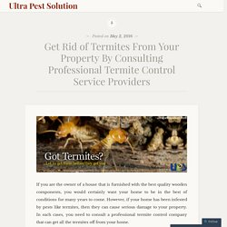 Protect Your Assets with The Help of Termite Control Services In Gujarat