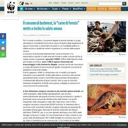 """Il consumo di bushmeat, la """"carne di foresta"""" mette a rischio la salute umana"""