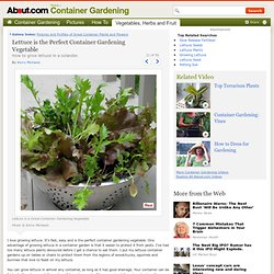 Container Gardening Vegetable - Lettuce is the Perfect Container Gardening Vegetable
