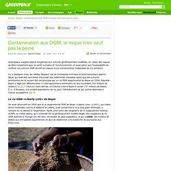 Contamination aux OGM: le risque n'en vaut pas la peine