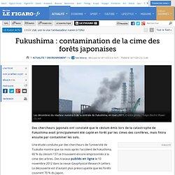 Environnement : Fukushima: contamination de la cime des forêts japonaises