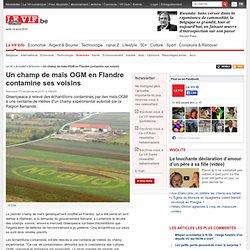 Un champ de maïs OGM en Flandre contamine ses voisins - Sciences et santé
