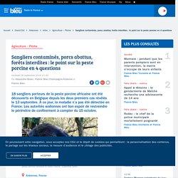 FRANCE BLEU 28/09/18 Sangliers contaminés, porcs abattus, forêts interdites : le point sur la peste porcine en 4 questions