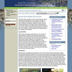 North Coast IRWMP: Content: Russian River Wildlife Communities