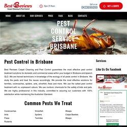 Cheap Pest Control Brisbane, Ipswich QLD