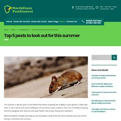 Top 5 Pests to look out for this summer