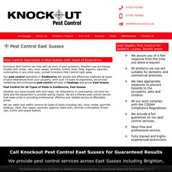 Pest Control East Sussex - Eastbourne, Hasings, Lewes, Seaford, Bexhill