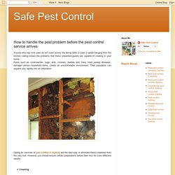 Safe Pest Control: How to handle the pest problem before the pest control service arrives