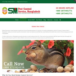 Rodent (Rat) Control Service in Dhaka, Bangladesh