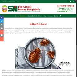 Bed Bugs Control Service in Cheap Price