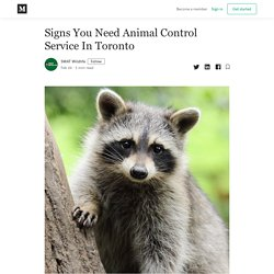 Signs You Need Animal Control Service In Toronto - SWAT Wildlife - Medium