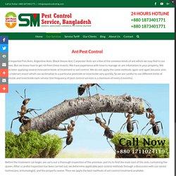 SM Pest Control Services in Bangladesh