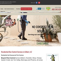 Bee Control & Removal Services near Chandler, AZ