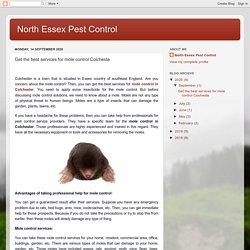 North Essex Pest Control: Get the best services for mole control Colcheste
