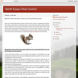 North Essex Pest Control: Squirrel control services: to free you of the perils they cause