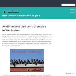 Avail the best bird control service in Wellington – Pest Control Services Wellington